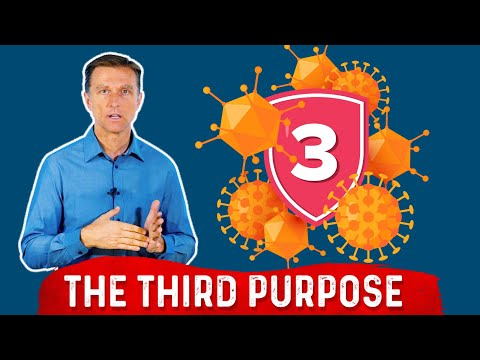 The 3rd Purpose of Your Immune System
