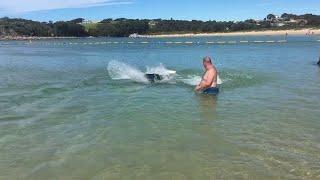 Seals Hunt for Fish on Shallow Beach || ViralHog