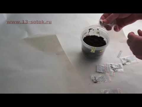 Как сажать табак