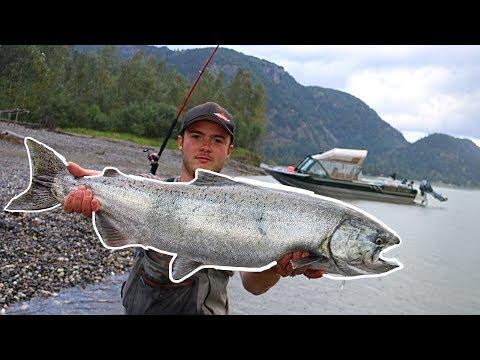 Bar Fishing On The Fraser River BC (BIG BITES!)