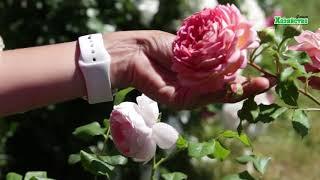 видео Садоводство Англии - Англия весной. Сады. <!--if(Цветники)-->- Цветники<!--endif--> - Каталог статей - Мой любимый английский сад