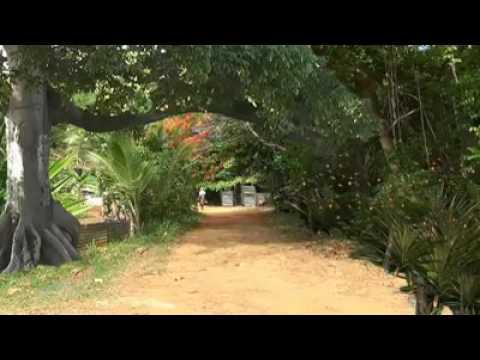 Valle De Collores Canta Victor Rosario