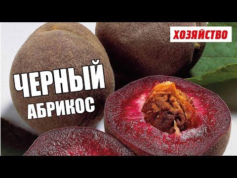 Абрикос Полезные и опасные свойства абрикоса