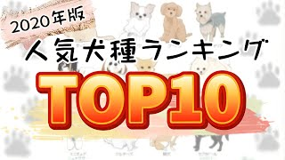 【最新】2020年度 人気犬種ランキング!ご家庭で最も飼われているワンちゃんは?