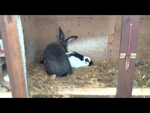 12 смелых зайцев -