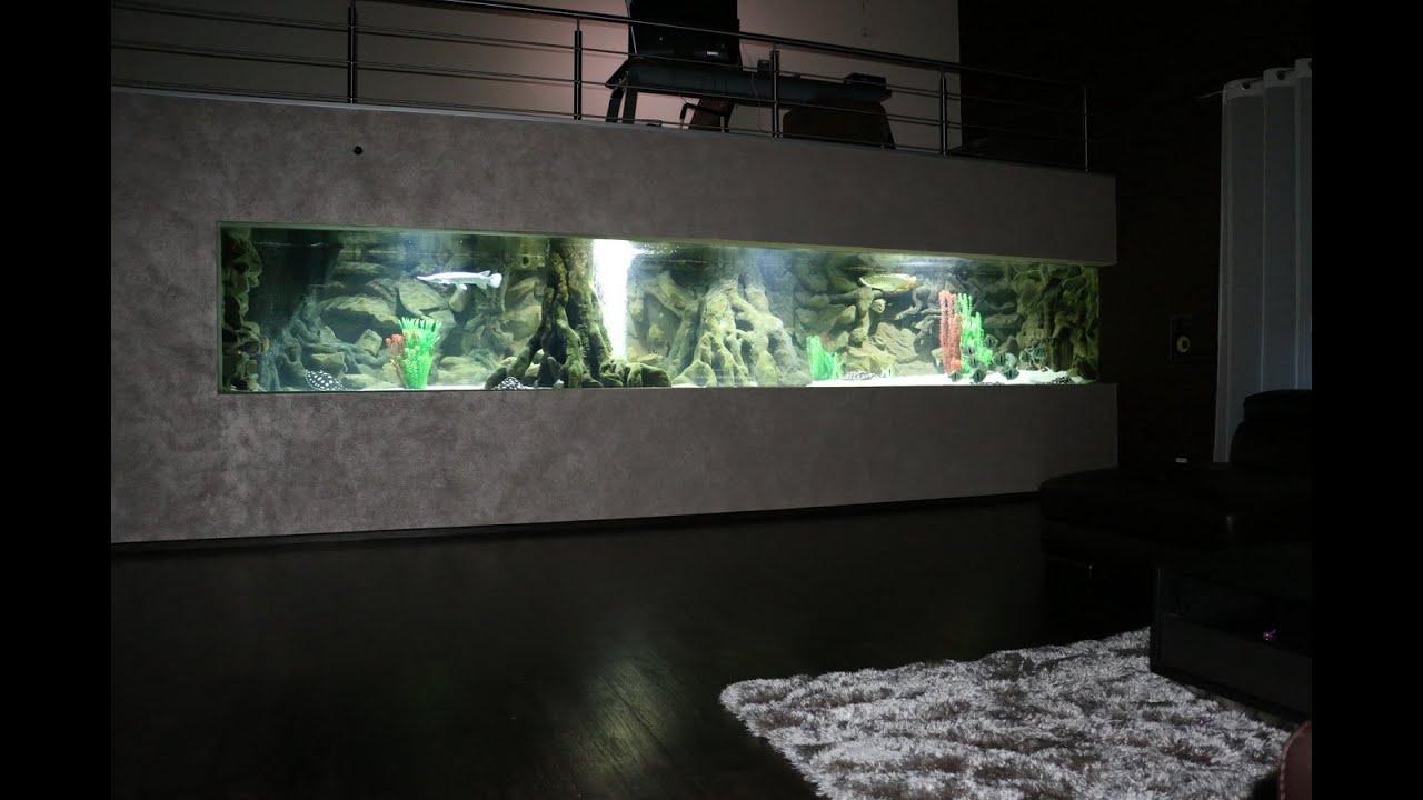 Freshwater Predatory Fish in Mega Aquarium  YouTube
