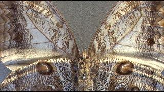 Открытие Коллекции бабочек в Зоологическом музее КФУ им. В. И. Вернадского – 10 ноября 2017 г.