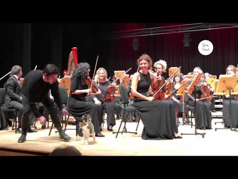 Cat steals the show during classical music concert in Istanbul