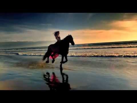 Animated Running Horse Wallpaper Hqdefault Jpg