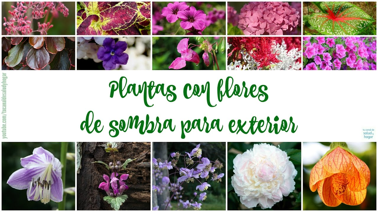 Plantas con flores de sombra para exteriores youtube - Plantas de sol y sombra ...