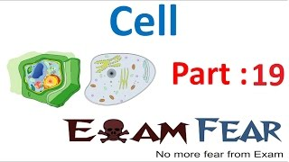 Biology Cell Part 19 (Plastids) Class 8  VIII
