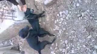 vuclip dog xx........