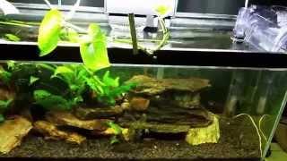 Around The World Update Of My Fish Room. 10-04-15