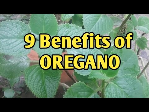 The AMAZING Health Benefits of OREGANO that you need to know. Must watch
