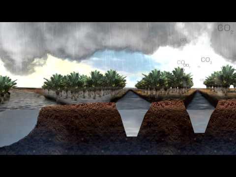 Penghancuran Gambut, Subsidensi Tanah dan Banjir di Asia Tenggara