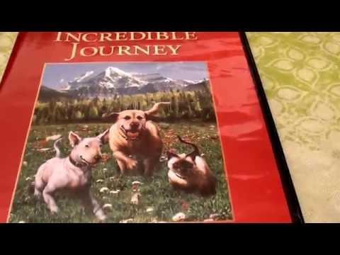 Disney The Incredible Journey 1963 movie ANIMAL ABUSE? ANIMAL CRUELTY?