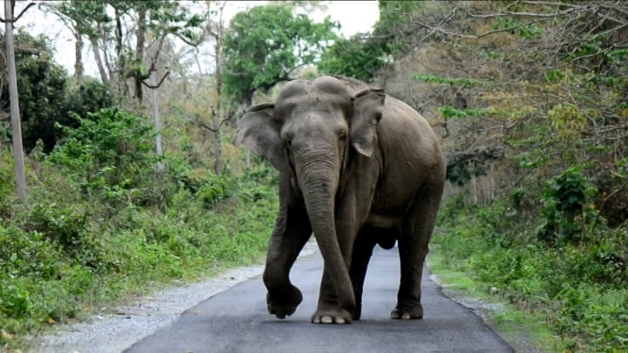 Image result for wild elephant