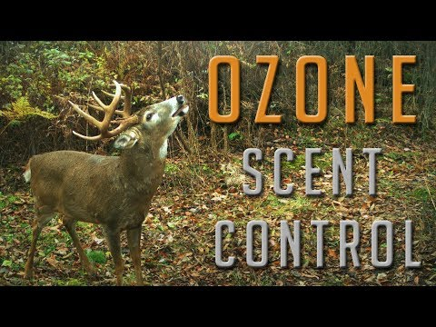 How Effective Is Ozone For Scent Elimination?