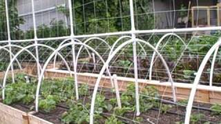 Growing Melons Vertically On A Trellis The Square Foot Gardening Way