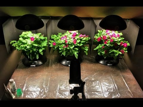 Secret Technique for Hydroponic Growth using 528 hz & Structured Water - Time Lapse Experiment