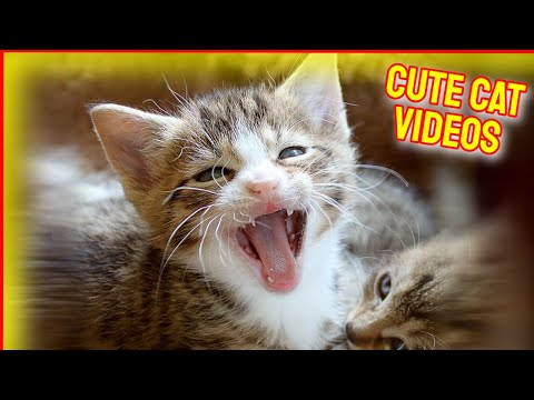 Cat Videos 🙀 Funny Cat Videos 🥰 Cute Cat Videos 2021#6