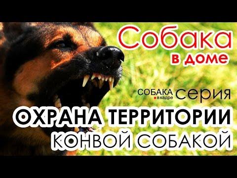 Собаки для охраны. Собака в доме.