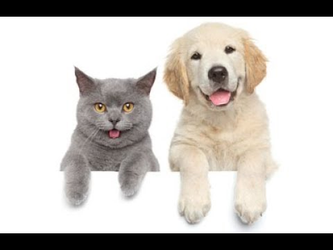 Kittens and Puppies Cute Videos ▶ Funny Cats and Dogs Moments 2018