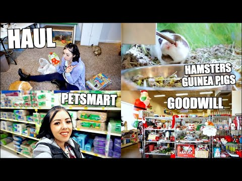 PETSMART HAMSTERS & GUINEA PIGS | Hamster Supplies Goodwill Shopping & Haul