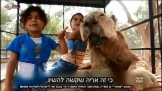 חדשות השבת - מבצע העברת בעלי החיים מעזה לישראל | כאן 11 לשעבר רשות השידור