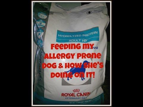 Hypoallergenic Dog Food – Royal Canin Hydrolyzed Protein Adult HP (Feeding my allergic dog)