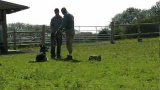 Dog Training Gloucestershire Uk - Bruno
