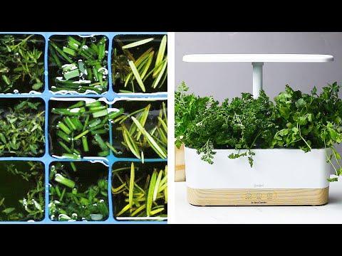 3 Easy Ways To Make Herbs Last Longer Healthy Food Videos