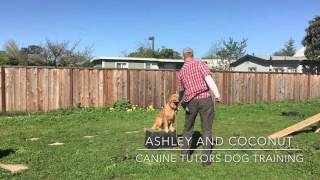 The Fastest And Easiest Way To Teach Your Golden Retriever To Sit And Stay