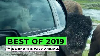 Behind the Best of 2019: Wild Animals | This is Happening
