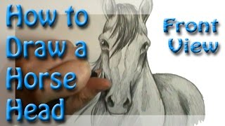 How to draw a Horse Head  Front View