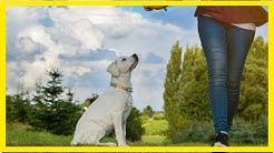 Der Hundeführerschein – Das müsst Ihr wissen
