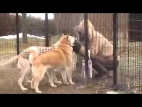 大好きな萌々ちゃんママと♪(北海道犬・サルーキ)