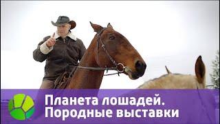 Планета лошадей. Породные выставки   Живая Планета
