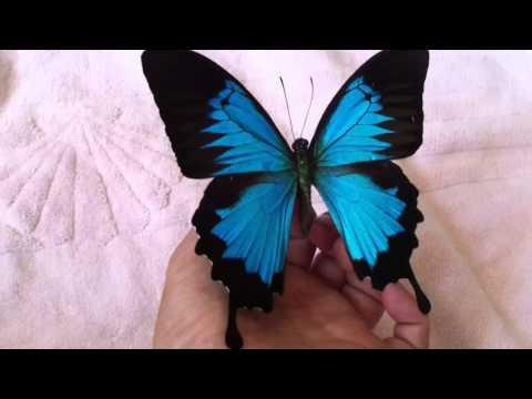 Repairing A Broken Wings