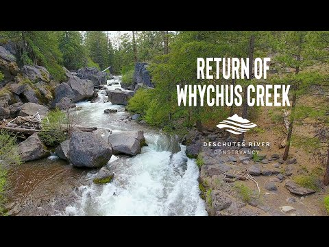Return Of Whychus Creek