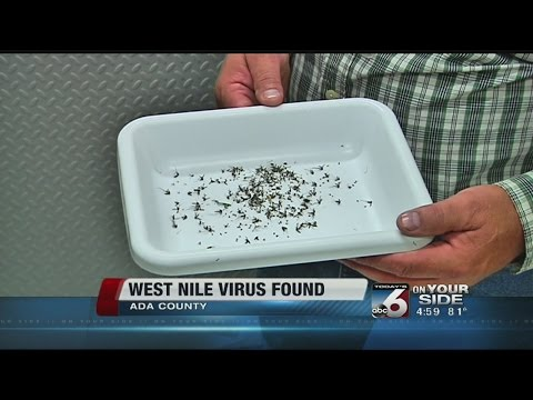 West Nile Virus detected in Ada County