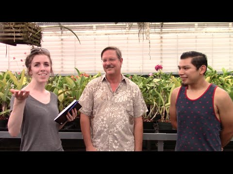 An interview with Fred Clarke and Carlos Lopez at Sunset Valley Orchids