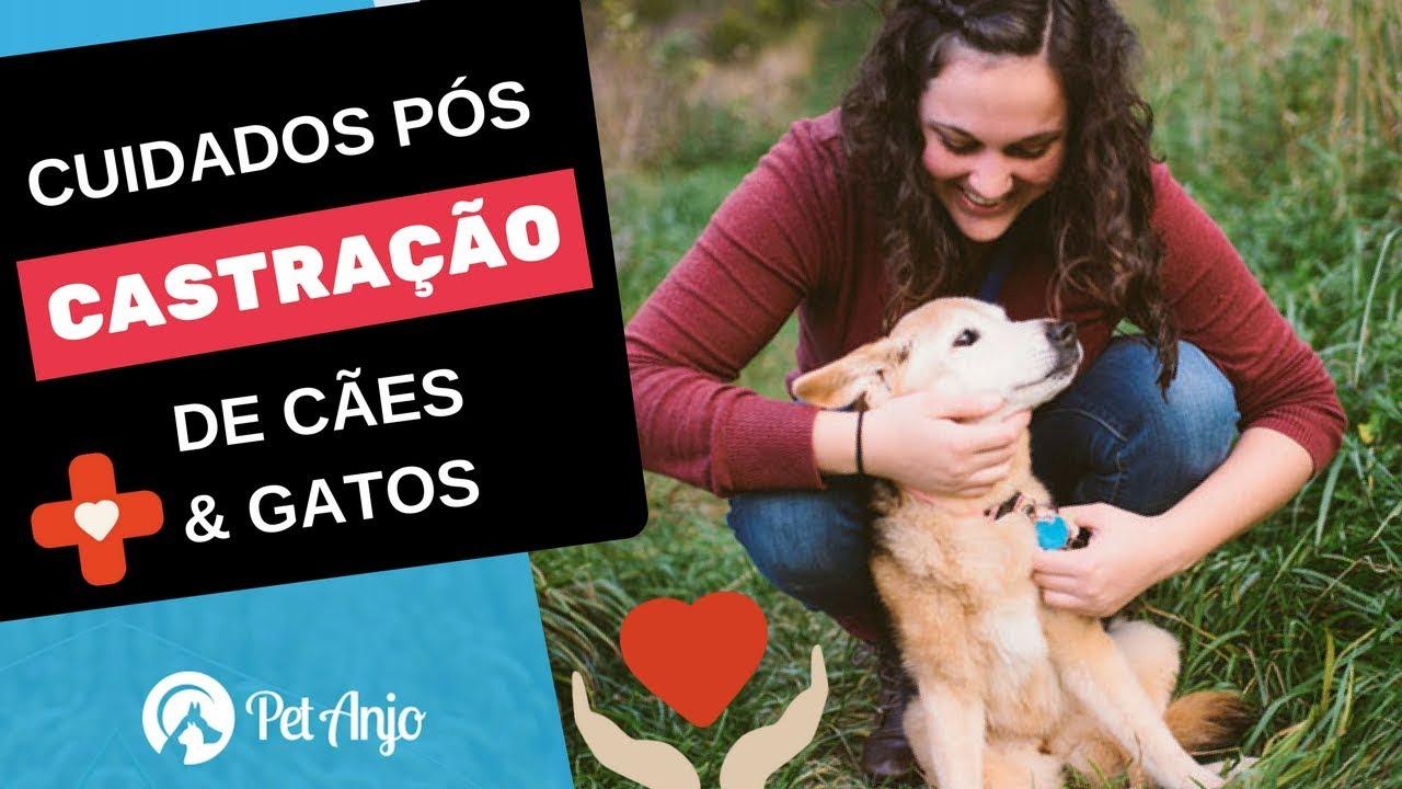 Cuidados pós castração de cachorros e gatos // Papo Pet por Dra. Carol Rocha
