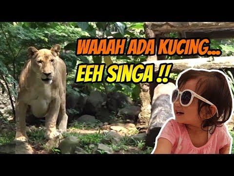 Kebun Binatang Ragunan Jakarta 2019 - Ragunan Jakarta Zoo