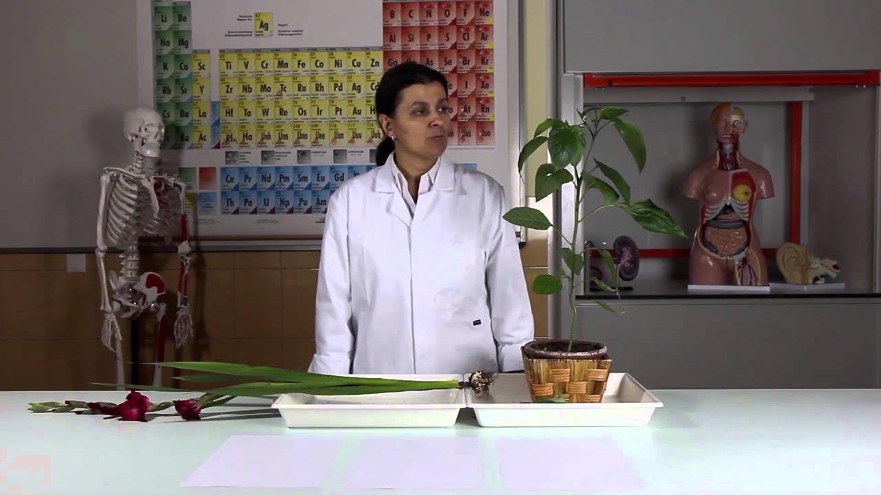 egy általános kenet dekódolása a növényben)