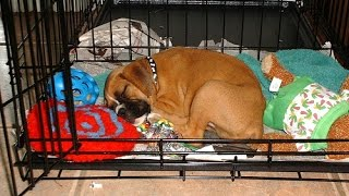 Dog Training - Crate Training For Dogs And Puppies