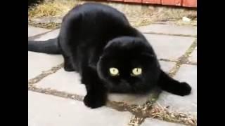 That cat-mèo đen đáng yêu, baby