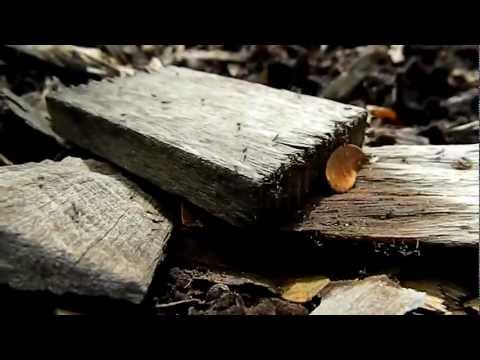 Ants moves disorderly at high speed [HD]