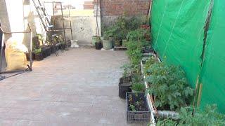 Organic Summer Vegetable Garden Update 8 April 2020