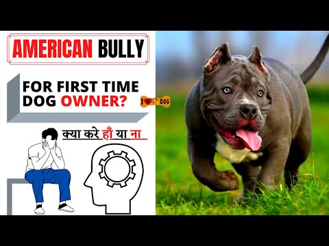 Know About American Bully Dog Breed - American Bully Dog Facts In Hindi